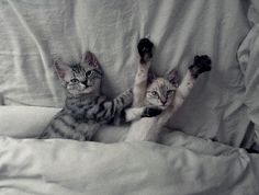 Kitties in bed!