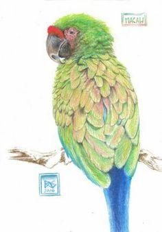 Colored Pencil Art | Tools & Materials for Colored Pencil Realism