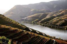 Autumn afternoon in the breathtaking Douro valley.. #husetsvinpåtur #vineyards #winecountry #winetravel #Portugal #enreiseiglasset #throwback by gunnarskoglund