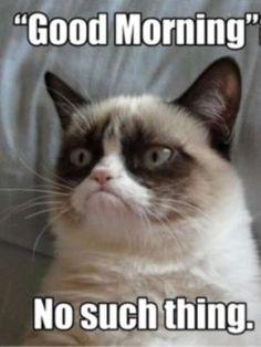 Grumpy Cat / Reproducción