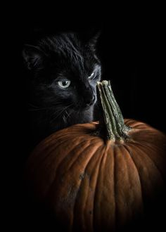 Took some pictures of my cat next to a pumpkin... this is the best result I could get, where she managed to be interested in the stem for a split second.