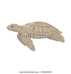 Illustration of a Hawksbill Sea Turtle swimming viewed from Side done in hand sketch Drawing style.  #turtle #sketch #illustration