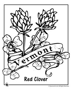 Alabama State Flower Alabama Coloring and Coloring pages