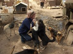 SOS for Serbian Animals #ThanksAMillion #Charity #Fundraising #Giving