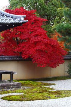 静寂の中で眺める紅葉 紅葉期はどの場所も混み合う京都ですが 御所東の廬山寺は喧騒が噓の様に静けさが広がります。 桔梗の寺として知られ...