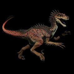 Raptor Form