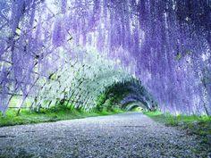 Japan 2013 by Abhisalid Tanarojpiyatach