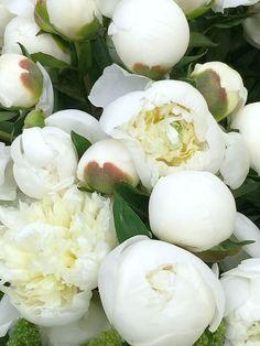 LA Flower Mart - details ~ history a bustling market Luxury Flowers, Exotic Flowers, White Flowers, Beautiful Flowers, Orchid Flowers, White Peonies, Cactus Flower, Purple Roses, La Flower Mart