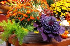 Fall container garden .. love autumn colors and the cabbage purple is a wonderful burst!