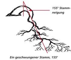 Geschwungener Stamm, 155° Neigung
