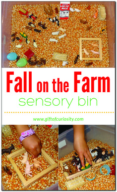 Fall on the farm sensory bin using dried corn as the base and Safari Ltd TOOB figures Farm Sensory Bin, Toddler Sensory Bins, Sensory Play, Sensory Diet, Sensory Table, Farm Activities, Autumn Activities For Kids, Fall Preschool, Infant Activities