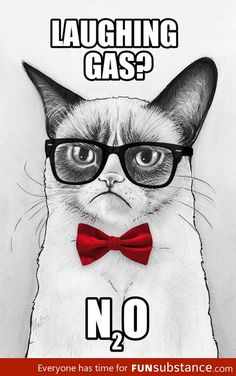 Funny pictures about Grumpy Chemistry Cat. Oh, and cool pics about Grumpy Chemistry Cat. Also, Grumpy Chemistry Cat. Chemistry Cat, Chemistry Drawing, Teaching Chemistry, Nerd Jokes, Nerd Humor, Grumpy Cat Humor, Cat Memes, Grumpy Kitty, Kitty Cats