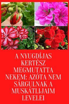 Vegetables, Garden, Plants, Food, Decor, Garten, Decoration, Lawn And Garden, Essen