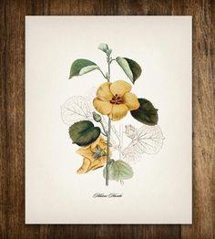 Yellow Hibiscus Vintage Botanical Print by Printed Vintage on Scoutmob Shoppe