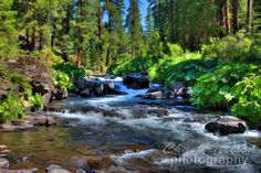 The cold water of the McCloud River tumbles over rocks as it weaves its way through the forests and hills on its way to Shasta Lake. This scene was captured between the Middle and Lower Falls. A painterly treatment adds a pleasing touch to a refreshing scene. Photographed in Siskiyou County, CA. http://www.chucknelsonphotography.com/p154840061/h1E89DDC5