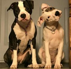 50% of the pitties in this pic. remained confused!!