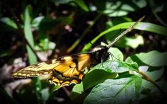 Butterfly after the Rain by Ron Worobec on 500px