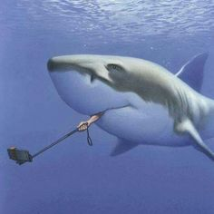 The great white shark selfie! The Great White, Great White Shark, Satire, Foto Pal Face, Selfies, Wilhelm Busch, Satirical Illustrations, Humor Grafico, Shark Week