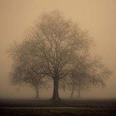 DIANA'S WISDOM TREES.  Arbor
