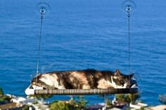 A sunny perch for your furry friend who likes to look out the window.