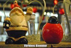 Jul hos Världens Blommor