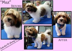 This is Max's first grooming!! Isn't he a cutie patootie?