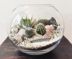 79 Awesome Indoor and Outdoor Cactus Garden Ideas - Planters wedding Terrarium succulentes