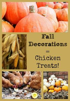 fall decorations make healthy chicken treats Chicken Treats, Chicken Feed, Healthy Chicken, Chicken Coops, Backyard Poultry, Chickens Backyard, Backyard Farming, Suet Cakes, Meal Worms
