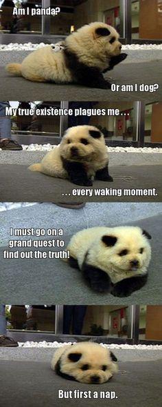 Ce chien serait-il un croisement entre un panda et une canidé ? Mystère... En tout cas, il est trop mignon ! <3