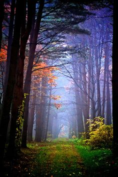 New tree forest pathways ideas Foto Nature, All Nature, Beautiful World, Beautiful Places, Beautiful Pictures, Wonderful Places, Beautiful Roads, Beautiful Forest, Pathways