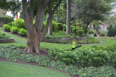 Woodland garden with lush plantings.