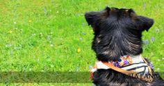 Reflektor-Hundetuch mit Blumenmuster. Ideal für mittelgroße und große Hunde.