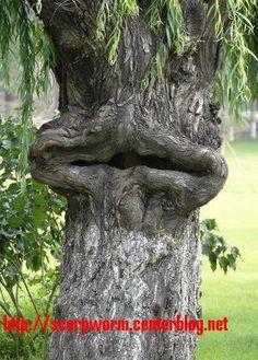le bois nous surprend