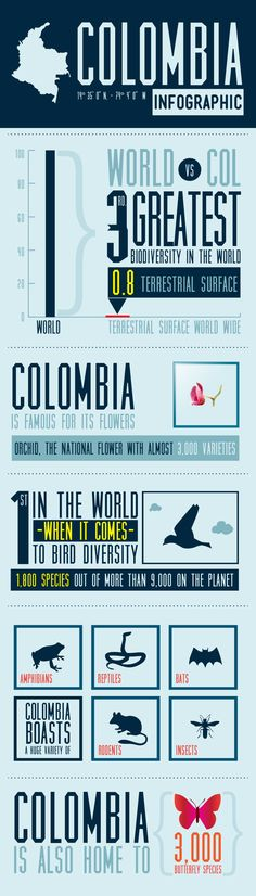 Infographic I made about Colombia  Miami Ad School
