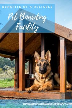 Pet Boarding in Epping has been the most popular solution for pet owners who need to leave their pets. These days' pet hotels with all kin. Pet Hotel, Pet Boarding, Your Pet, Benefit, To Go, Website, Pets