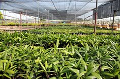 Realistic Graphic DOWNLOAD (.ai, .psd) :: http://jquery.re/pinterest-itmid-1006924414i.html ... Palm Seedlings. ...  bag, branch, breed, farms, fertilizer, food, leaves, nature, nursery, palm, product, seedlings, stem, sunlight, tree, trunk, water  ... Realistic Photo Graphic Print Obejct Business Web Elements Illustration Design Templates ... DOWNLOAD :: http://jquery.re/pinterest-itmid-1006924414i.html