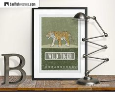 Asian Tigers, Vulnerable Species, Asian Cat, Earth Poster, Wild Tiger, Do It Yourself Furniture, Animal Posters, Frame It, Vulnerability