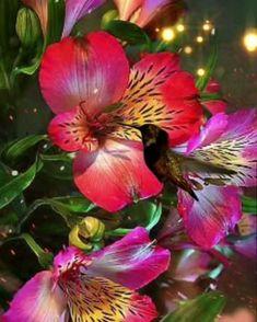 Good Night Flowers, Good Morning Beautiful Flowers, Good Morning Images Flowers, Good Morning Roses, Beautiful Flowers Images, Beautiful Nature Pictures, Beautiful Fantasy Art, Flower Images, Beautiful Roses