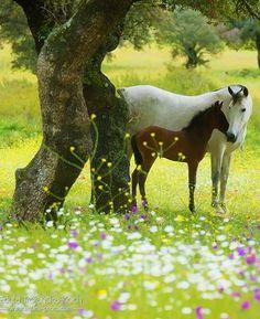 https://milascioandare.tumblr.com/post/163570978499/scarlettjane22-andalusian-mare-foal-edyta