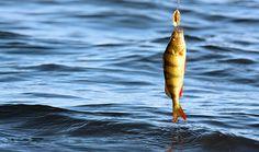 kalastus.jpg (1500×886)