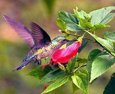 Flying beauty