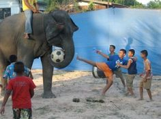 Ever witnessed a game of soccer with a Thai Elephant? Now, you can, if you visit Elephants Playing, Thai Elephant, Thailand Elephants, What Activities, Thailand Travel, Phuket, Soccer, Island, Vacation