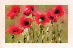 Red Poppies   Prints from $27