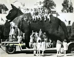 Huge Black Cat, San Diego, CA, 1935.