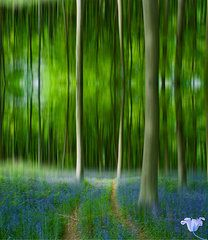 Bluebell Wood Featured Images - Blue Bell Art Digital art  by David French