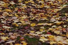 How to help Hedgehogs - Pumpkin Beth Stuff To Do, Things To Do, Autumn Garden, Hedgehogs, Winter Time, Horticulture, Autumn Leaves, Perfect Place, Gardening Tips