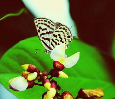 #butterfly #flower #leaves  #focus #macro zoom #morning #canon 700d #sourabh_jaiswal_photography #india #photography