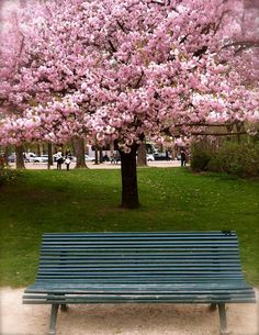 55 Best Park Benches Images Benches Park Benches Nature