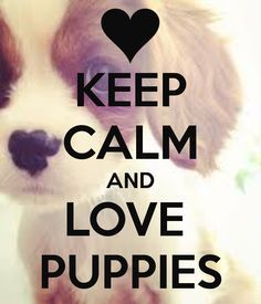 keep calm and love dogs -