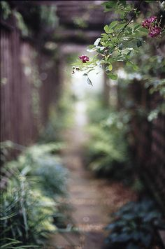 Rose and path Life Is Beautiful, Beautiful Images, Hd Background Download, Bokeh Photography, Garden Painting, Rustic Gardens, Blurred Background, Hd Backgrounds, Nature Paintings
